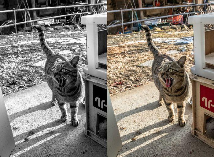 Cat 猫 Yamanashi,japan EyeEm Place Of Heart
