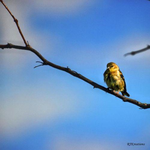 Supernormal Birds Nature EyeEm Nature Lover