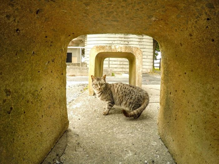 Portrait Of Cat Looking Through Arch