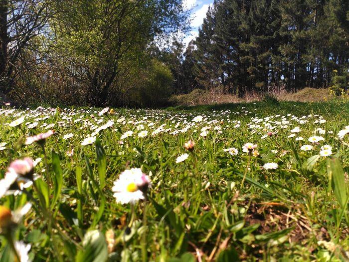 Primavera Cor