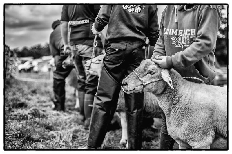 Agricultural show in Swinford, Ireland. August 2017 Ireland Agriculture Men Day Domestic Animals Outdoors Human Body Part Focus On Foreground Mammal Livestock