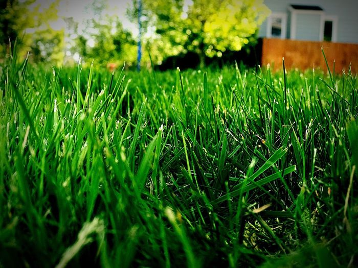 Grass Green Color Growth No People Nature Outdoors Close-up Day Building Exterior Architecture Beauty In Nature Freshness