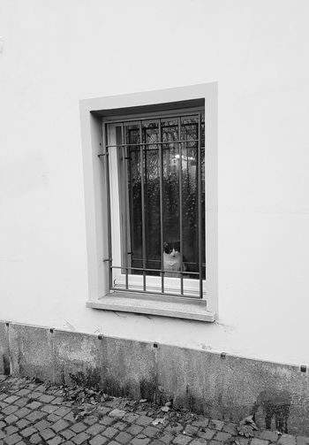 Window Built Structure Architecture No People Building Exterior Day Indoors  Cat At Window Black And White Photography At The Window Cat Black And White Cat Looking Looking Cat Curious Cat Couriosity Indoor And Outdoor EyeEmNewHere Cat Watching Watching For Something Adapted To The City Glass Reflection Reflections Window View Resist Pet Portraits