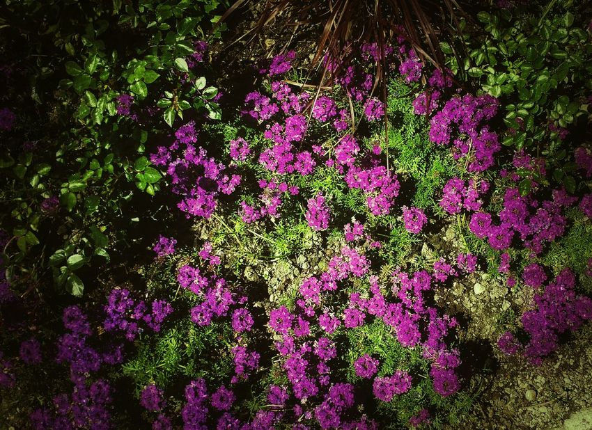 Yeah Springtime! Spring Frühling Flowers Blumenmeer Blumen Blumenteppich Nature Natur EyeEm NatureLover