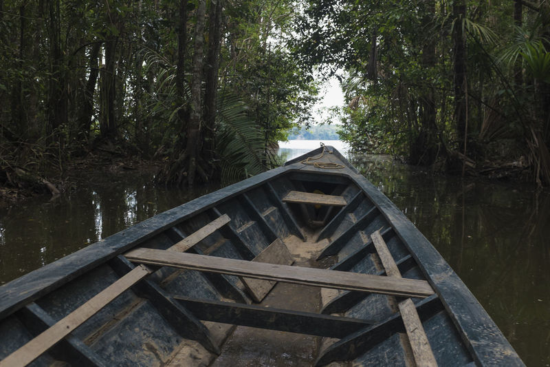 Amazon Biodiversity Boat Environmental Conservation Forest Lago Sandoval Lake No People Outdoors Peru Protected Areas Puerto Maldonado Tambopata Wetlands Wooden
