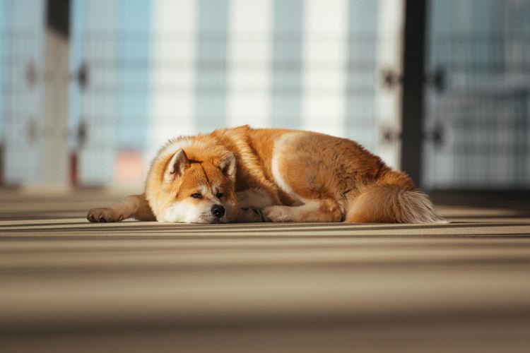 Dog sleeping on floor at home