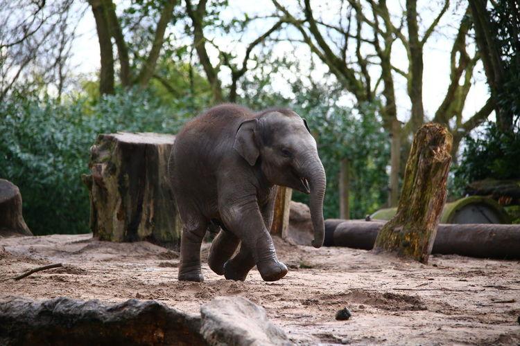 View of elephant calf