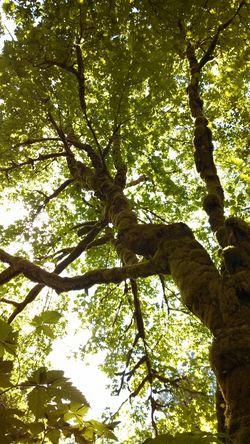 Tree Moss Nofilter#noedit