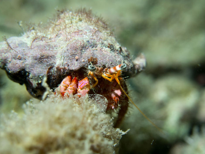 Close-up of hermit crab in mediterranean sea