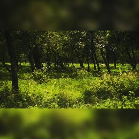 It look like a dense forest But this land is between Raipur and Bhilai Every time I look I passed But today spend sometime to click 😊 🌿 Nature Sun Beautiful Tree Light Green Weather Mothernature HTC Phonecamera Manualfocus Chhattisgarh