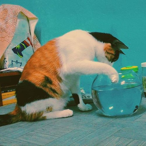 When you dream you wanna eat that fish.... MyCalico Pokcat Kitty