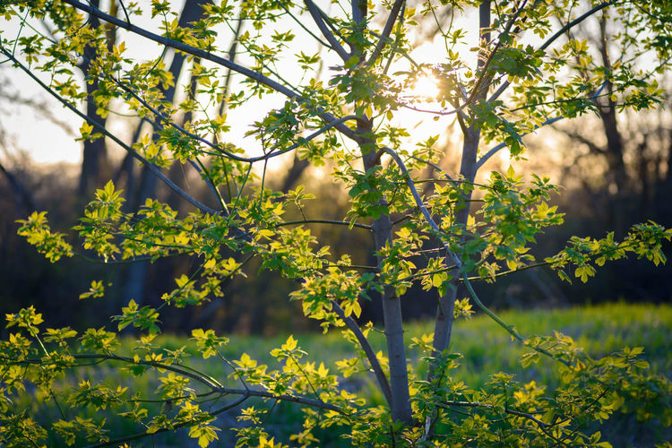 Yellow flowering plant against trees
