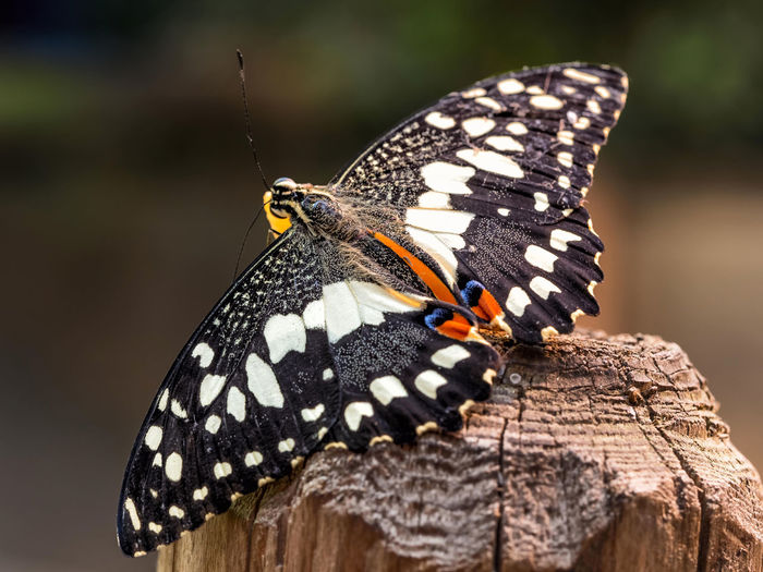 Close-up of butterfly perching on wooden post