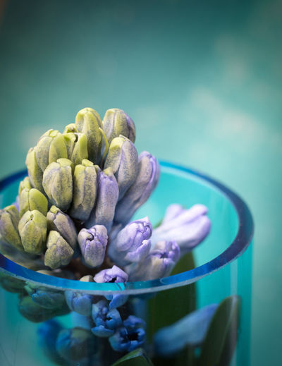 Freshness Close-up Still Life No People Indoors  Wellbeing Plant Nature Green Color Blue Selective Focus Beauty In Nature Flower Focus On Foreground Growth Purple Hyacinth Blüte StillLifePhotography EyeEm Nature Lover EyeEm Gallery EyeEm Best Shots Nature_collection Blütenzauber Nature Photography The Minimalist - 2019 EyeEm Awards