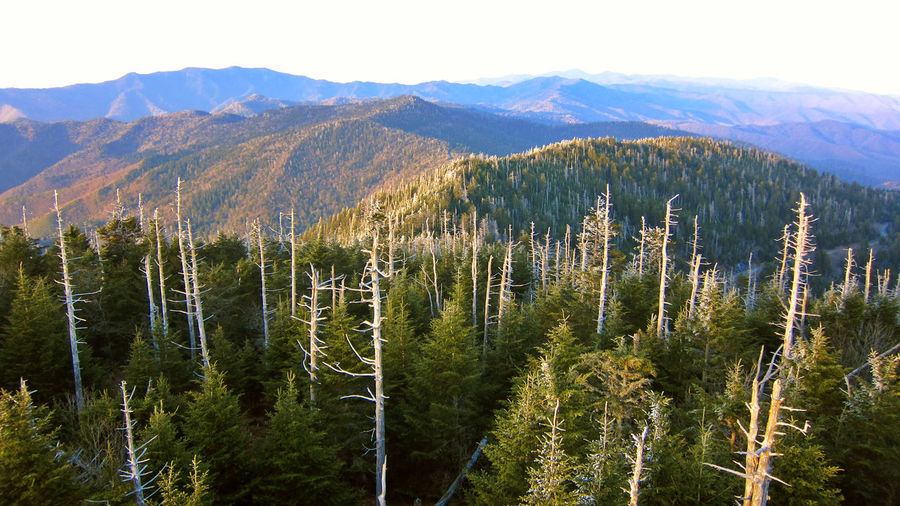 High angle view of trees against mountain range