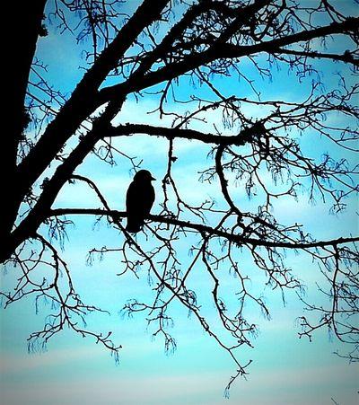 Black Bird Blue Bullshit Blah Blahhh Blahhhhhh It's Time For Someone To Do Something Feeling Blue Admiring Nature's Beauty Nature Makes Me Smile