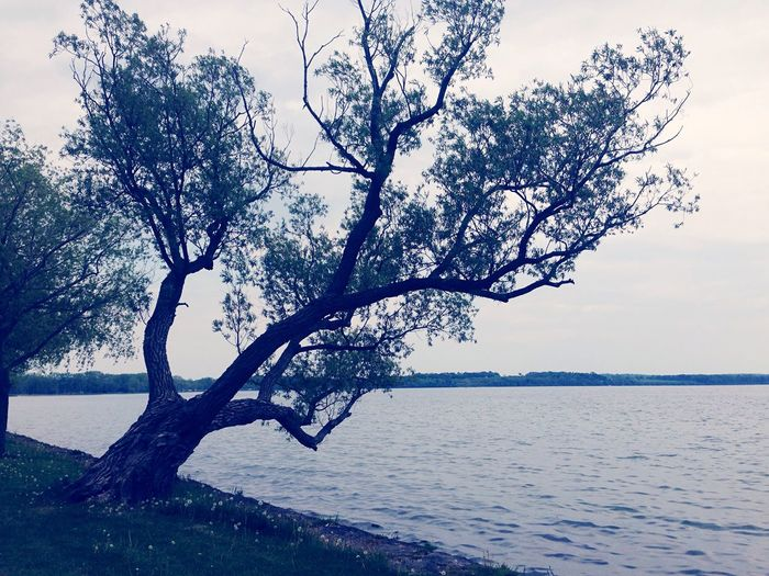 Nature Beautiful Outdoors Waves EyeEm Nature Lover Water Peeking Through Trees Alone View Mothernature Lakeshore Lake View Lakes  Lake