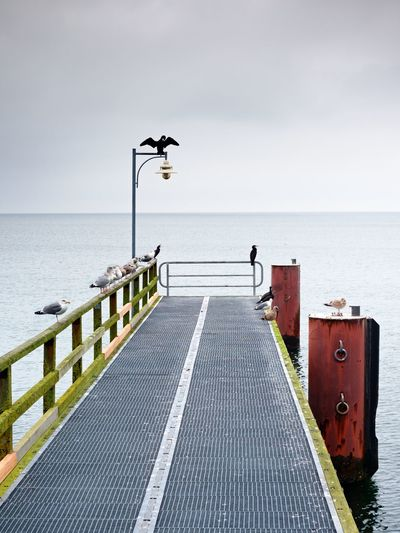 Empty pier in harbor. steel grate board. black cormorant sit on lamp. autumn mist on pier above sea.