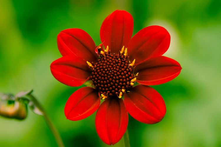 Close-up of red flower blooming in park