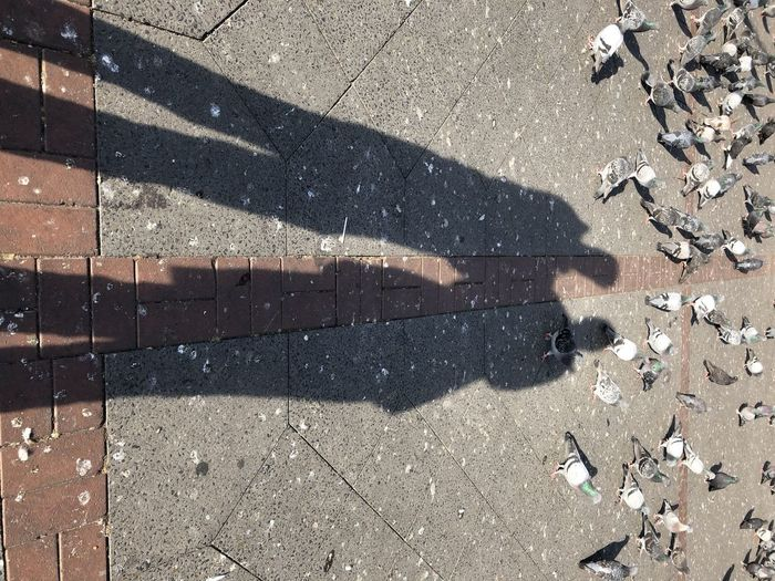 Shadow Sunlight High Angle View Nature Day City Footpath Street No People Stone Paving Stone Outdoors Road Falling Pattern Focus On Shadow Low Section Standing Lifestyles