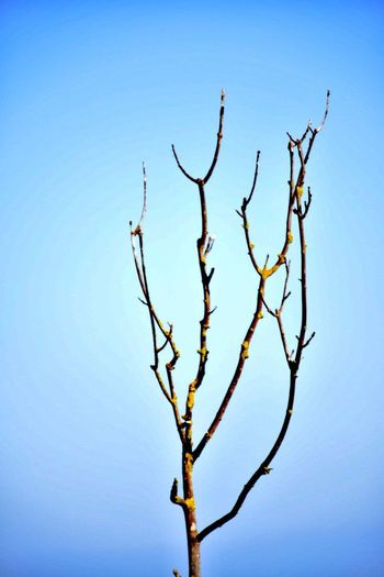 Clear Sky Nature Branch Beauty In Nature Low Angle View No People Bare Tree Tranquility Outdoors Tree Scenics Day Sky