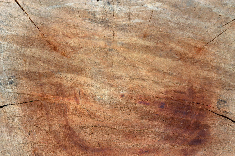 Old wood texture background surface natural pattern of cut tree Backgrounds Textured  Pattern Full Frame Brown No People Close-up Rough Wood - Material Abstract Colored Background Old Wood Tree Nature Flooring Indoors  Arts Culture And Entertainment Surface Level Scratched Wood Grain Textured Effect