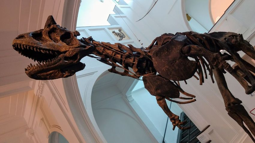 Dinosaur Smartphonephotography Museum Museum Of Natural History Zoology History Paleontology No People Day Indoors