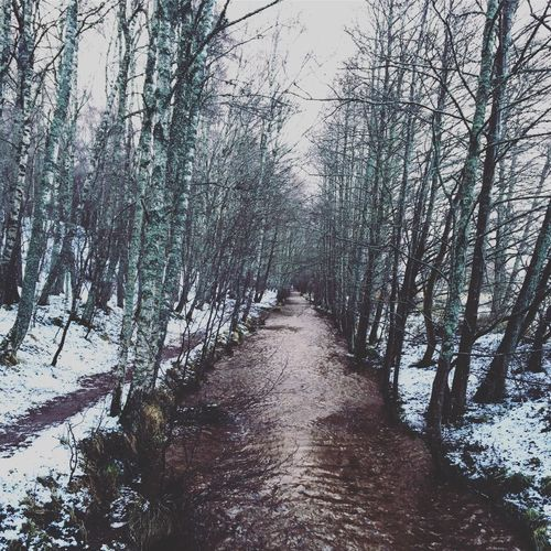 Winter Snow Cold Temperature Tranquility Outdoors Scenics Nature River Bare Tree Photooftheday