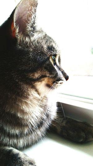 Pet Life  Kitty!