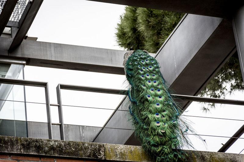 Parque del Retiro Architecture Azul Bird Bleu Green Color Madrid Spain No People Pajaro Pavo Real Pavone Plumas The Secret Spaces