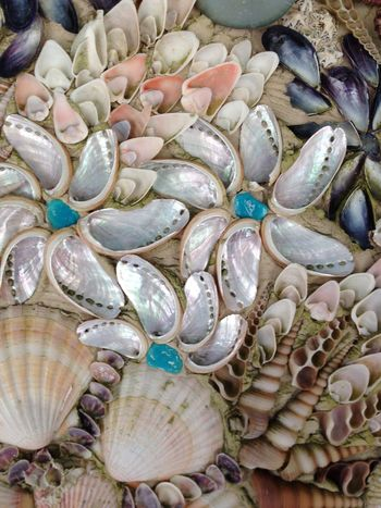 Tresco, sea shells Sea Shells 🐚 Pretty Isles Of Scilly Island Tresco