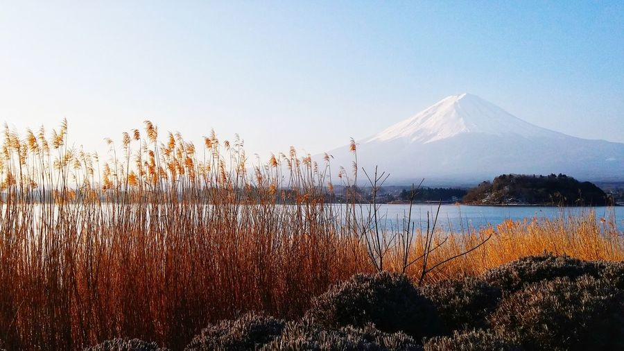 Landscape Lake Japannature Japantravel Canon Mt.Fuji Japan Grass Landscape Water Bird Mountain Flying Sky Silhouette Sunrise Tranquil Scene Blade Of Grass Tranquility Orange Color Grassland Snow Covered