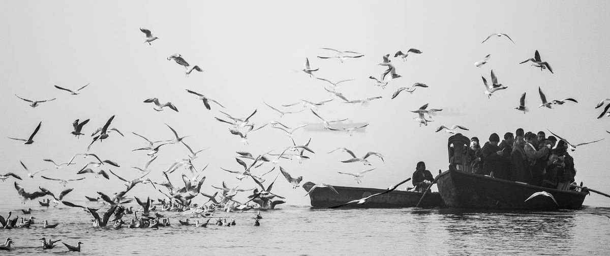 Bird Flying Large Group Of Animals Animal Themes Animals In The Wild Flock Of Birds Nautical Vessel Sky Animal Wildlife Waterfront Nature Outdoors Sea Water Scenics No People Beauty In Nature Day India Varanasi