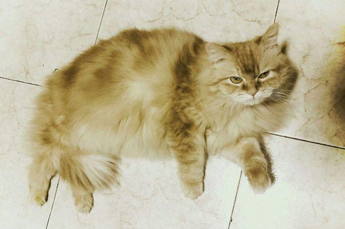 I Love My Cat Animals My Cat Animaisdomesticos Willy My Little Cat Animais Animais Pacion