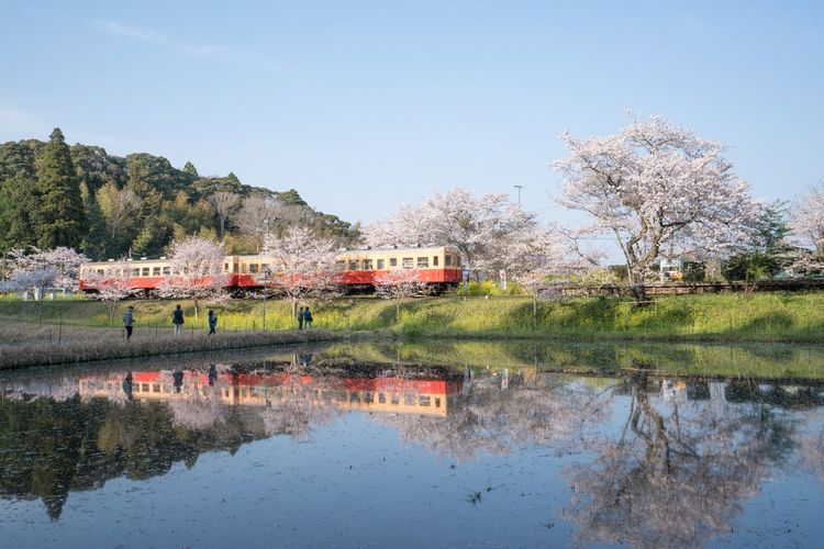 Nature Flower Taking Photos Tree Reflection Water Sky Cherry Blossoms Blossom Growth EyeEm Best Shots EyeEm Best Edits EyeEm Gallery いすみ鉄道 Isumi Railway Train Trainstation