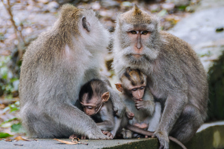 Animal Family Animal Themes Animal Wildlife Animals In The Wild Baboon Close-up Day Female Animal Focus On Foreground Infant Japanese Macaque Mammal Monkey Nature Outdoors People Portrait Sitting Togetherness Two Animals Young Animal