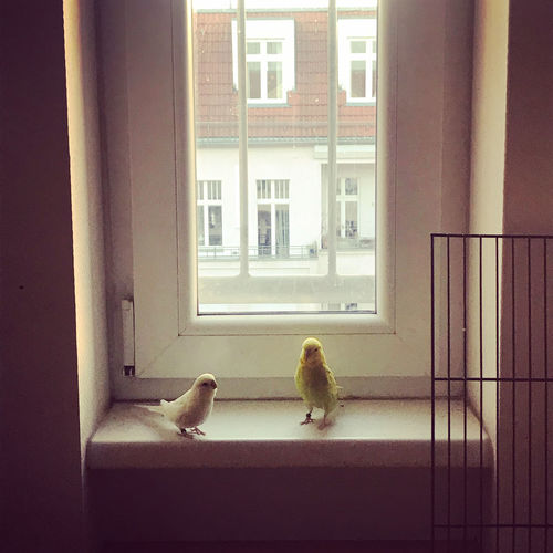 View of two birds in building
