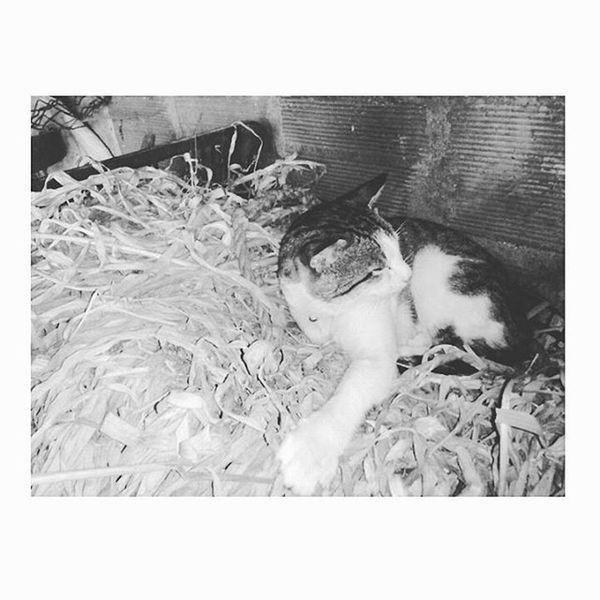 ❇Cats are like music It's foolish to try to explain their Worth to those who don't appreciate them.❇ Goodmorning Stretch Gm  Ohayo Bomdia Cute Cuteness KAWAII Kawainess Adorable Amazing Sun Rain Fog Sun Sunnyday Emo FogyDay Nosun Cat Kitten Kitty Otaku Otakugirl AnimesLover Sleepy Bed Cosplayer PicOfTheDay 🎧 🐈