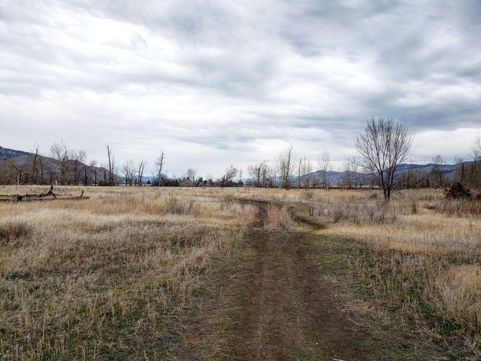 trail hike Tree