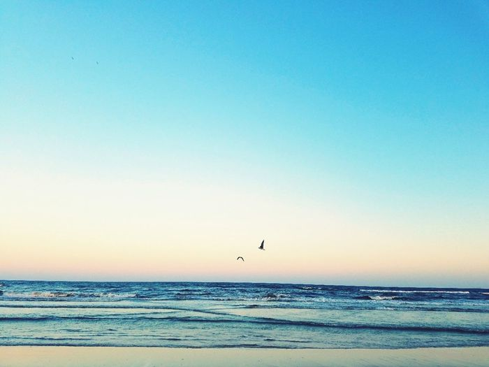 Beach Sea Clear Sky Water Flying Nature Sky Horizon Over Water Beauty In Nature No People Bird Scenics Outdoors Day Surfesidebeach Texas