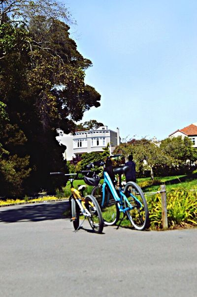 Celebrate Your Ride SanFranciscoLove Streetphoto Street Photography Sanfrancisco EyeEm Best Edits EyeEm Best Shots Bicycle Parking Bicycle In The Park Sanfranciscopark Cuteness Q Cute♡ Light And Shadow Nature Photography