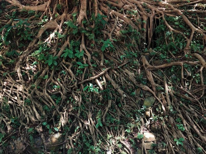 Nature Outdoors Tree Tree Roots  Roots Roots And Branches Forest Forest Lively Old