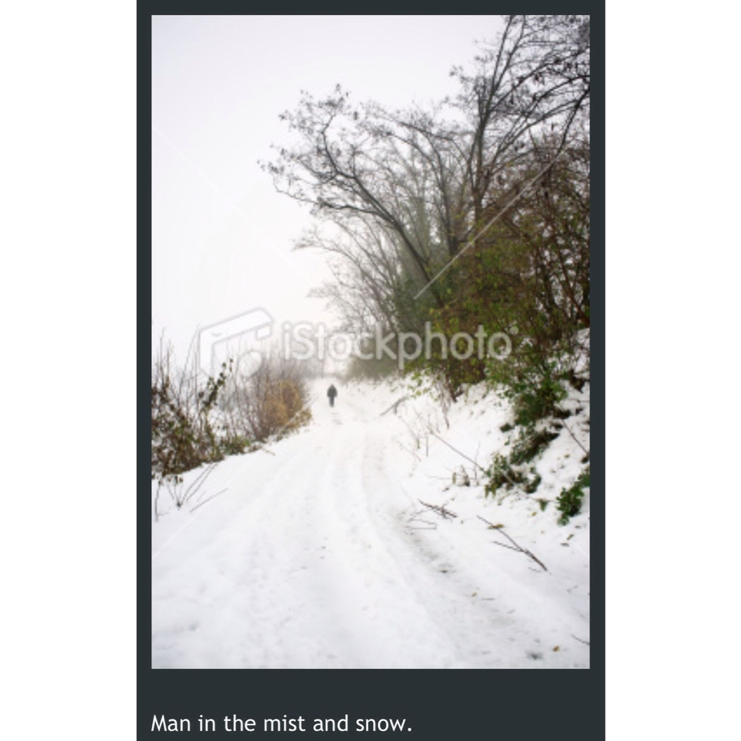 snow, winter, cold temperature, transportation, transfer print, text, communication, the way forward, weather, road, western script, season, tree, auto post production filter, bare tree, nature, road sign, white color, diminishing perspective, sky
