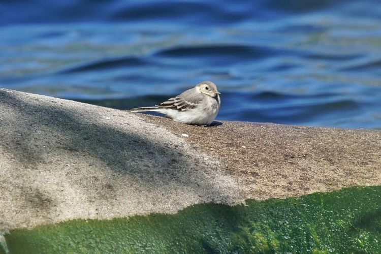 Bird On Rock  With Water In Background