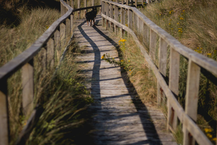 Bridge - Man Made Structure Day Focus On Background Footbridge Footpath Full Length Grass Growth Mammal Nature One Person Outdoors People Plant Railing Real People Selective Focus The Way Forward Walking Walkway