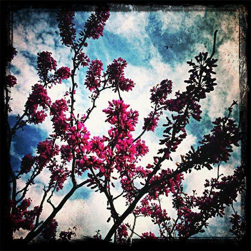 Flowers Blue Sky Pink Flowers In The Sky