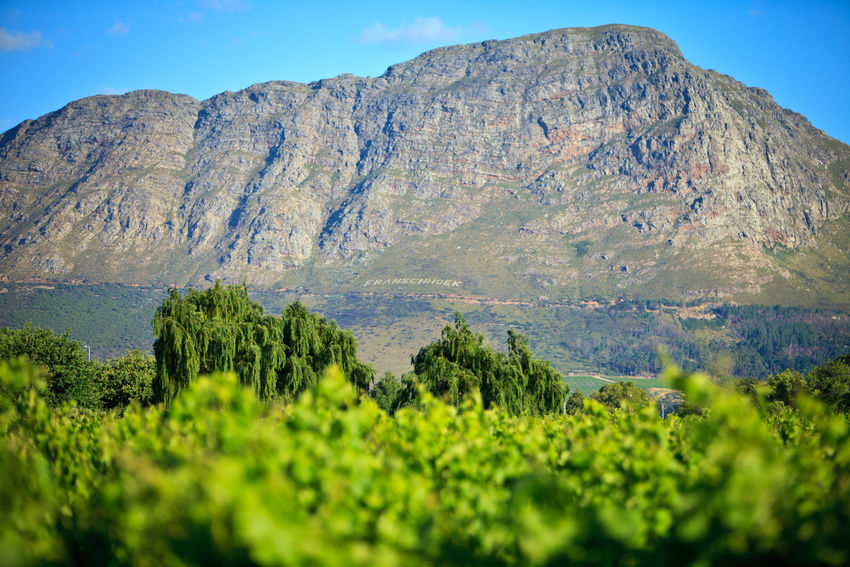 Franschhoek, Western Cape, South Africa Africa Beauty In Nature Day Franschhoek Landscape Mountain Mountain Range Mountains Nature No People Outdoors Physical Geography Plant Scenics Sky South Africa Stellenbosch Tranquil Scene Tranquility Vines Viticulture Water Western Cape Wine Winemaking