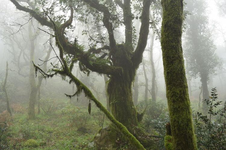 El Bosque de la Niebla Bosque De La Niebla Fern Fog In The Forest Fog In The Trees Frio Helecho Tree Helechos Colgantes Humedad Levante Niebla Nieblas#invierno#paisaje