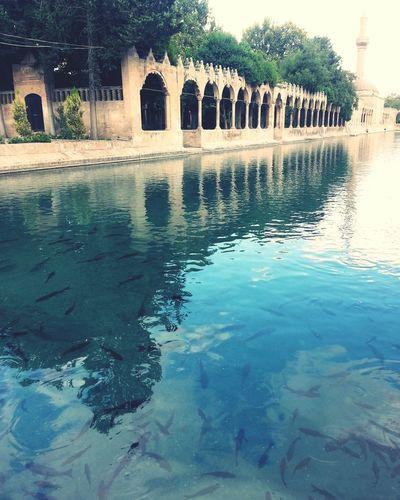 Sanliurfa Balikli Göl Hz Ibrahim Water Lake Türkiye 💙💛 Turkiyem Turkey Şanlıurfa