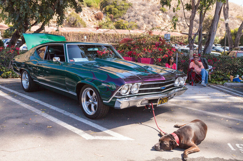 Laguna Beach, CA, USA - October 2, 2016: Green and blue 1969 Chevy Chevelle owned by John Pettinato and displayed at the Rotary Club of Laguna Beach 2016 Classic Car Show. Editorial use. 1969 Car Show Chevelle Chevrolet Chevy Classic Car Classic Car Show Classic Cars Laguna Beach, CA Muscle Car Old Car Old Cars Vintage Car Vintage Cars